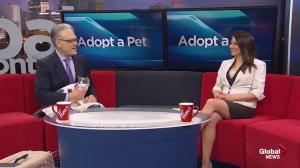 Edmonton Humane Society:  Penny & Patches